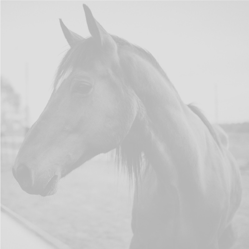blank_horse