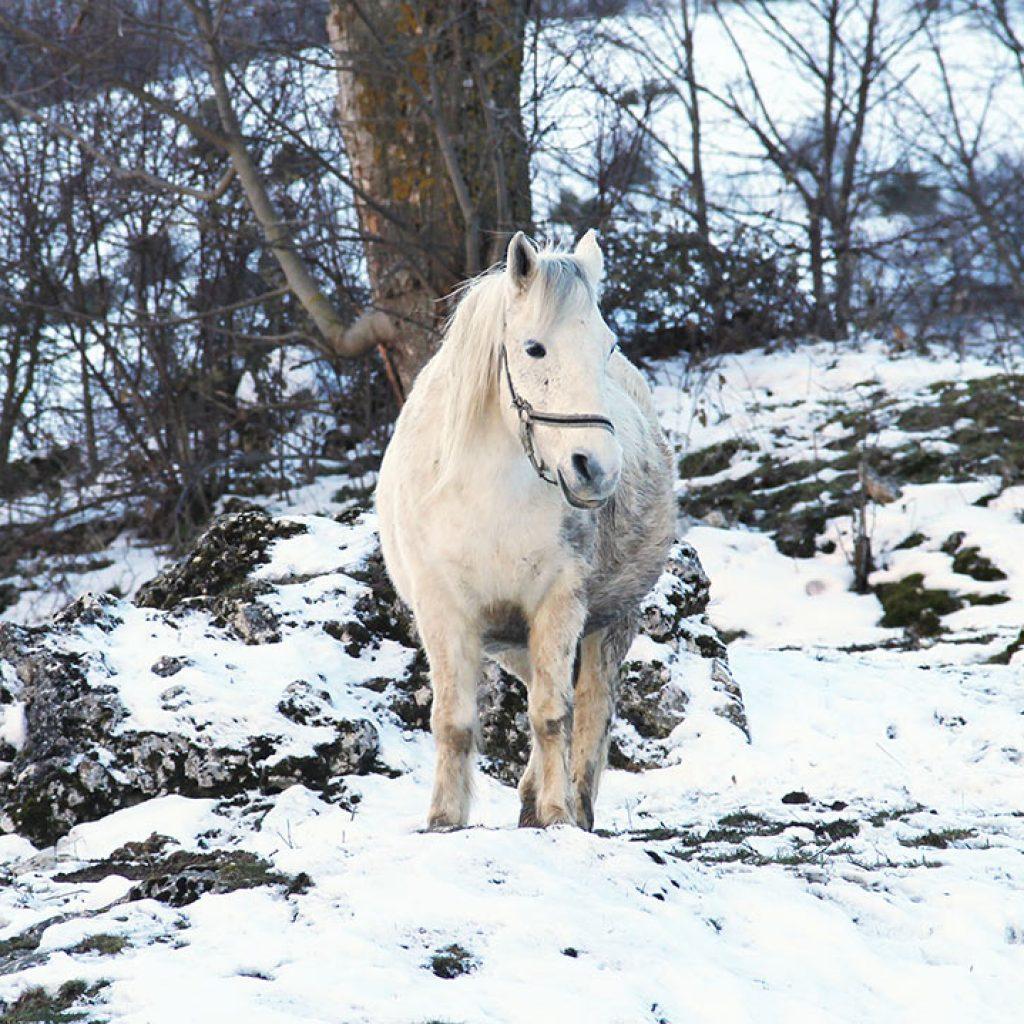 zima_polkolonie
